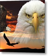 The Bald Eagle Metal Print