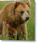The Bear 1 Dry Brushed Metal Print