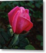 The Beautiful Rose Bud Metal Print