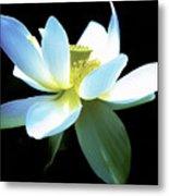 The Beauty Of A Lotus Metal Print