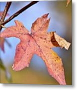 The Beauty Of Fall Metal Print
