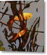 The Beauty Of Goldfish Metal Print