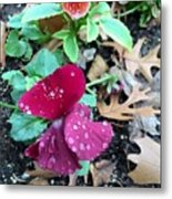 The Beauty Of Nature  Metal Print
