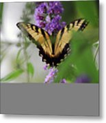 The Beauty Of Spring Metal Print