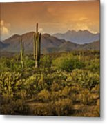 The Beauty Of The Sonoran Desert  Metal Print
