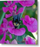The Bee And The Flowers Metal Print