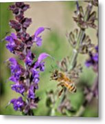 The Bee And The Laveder Metal Print