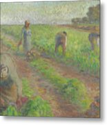 The Beet Harvest Metal Print