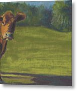 The Belted Cow Metal Print
