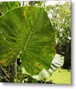 The Big Leaf Metal Print