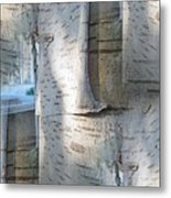 The Birch Metal Print