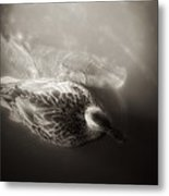 The Bird And The Fish Metal Print