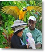 The Bird Lady At Ardastra Gardens Metal Print