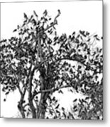 The Birds And The Tree Metal Print