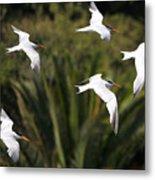 The Birds Metal Print