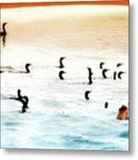 The Birds Santa Rosa Island Metal Print