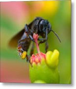 The Black Bee Metal Print by Cesar Marino