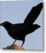 The Black Crow II Metal Print
