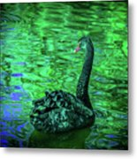 The Black Swan Metal Print