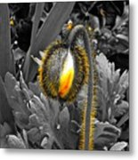 The Bloom Within Metal Print