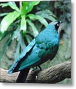 The Blue Bird Metal Print