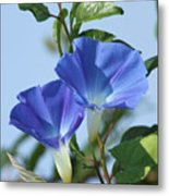The Blue Morning Glory Metal Print