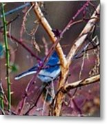 The Blue Of Winter In The Woods Metal Print