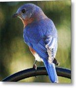 The Bluebird Metal Print