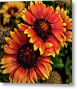 The Bold And Beautiful Pair Metal Print
