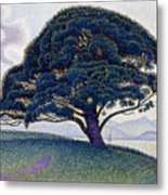 The Bonaventure Pine  Metal Print