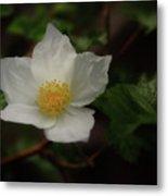 The Boulder Raspberry Flower Metal Print