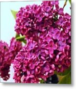 The Branch Of A Purple Lilac Metal Print