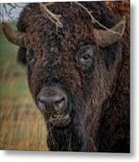 The Buffalo 2 Metal Print