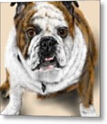 The Bull Dog Pup Metal Print