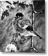 The Bullfinch Black And White Metal Print