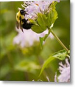 The Bumble Bee Metal Print