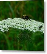 The Bumblebee And The Fly Metal Print