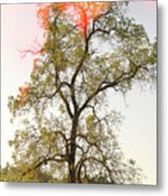 The Burning Tree Metal Print