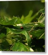 The Busy Lady Bugs Metal Print
