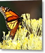 The Butterfly 2 Metal Print