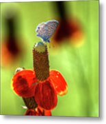 The Butterfly And The Coneflower Metal Print