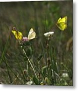The Butterfly Dance Metal Print