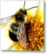 The Buzz Metal Print