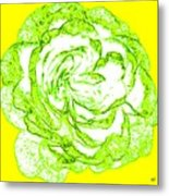 The Cabbage Rose Metal Print