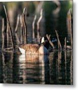 The Canada Goose Metal Print