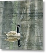 The Canadian Goose Metal Print