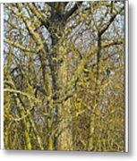 The Cat Finds Its Path Metal Print