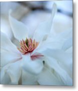 The Center Of Beauty Metal Print