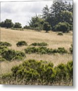 The Central Coast In May Metal Print