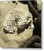 The Chain And The Fossil Metal Print